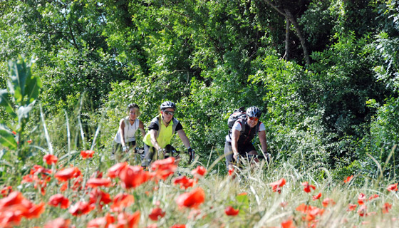 Provence Biking 